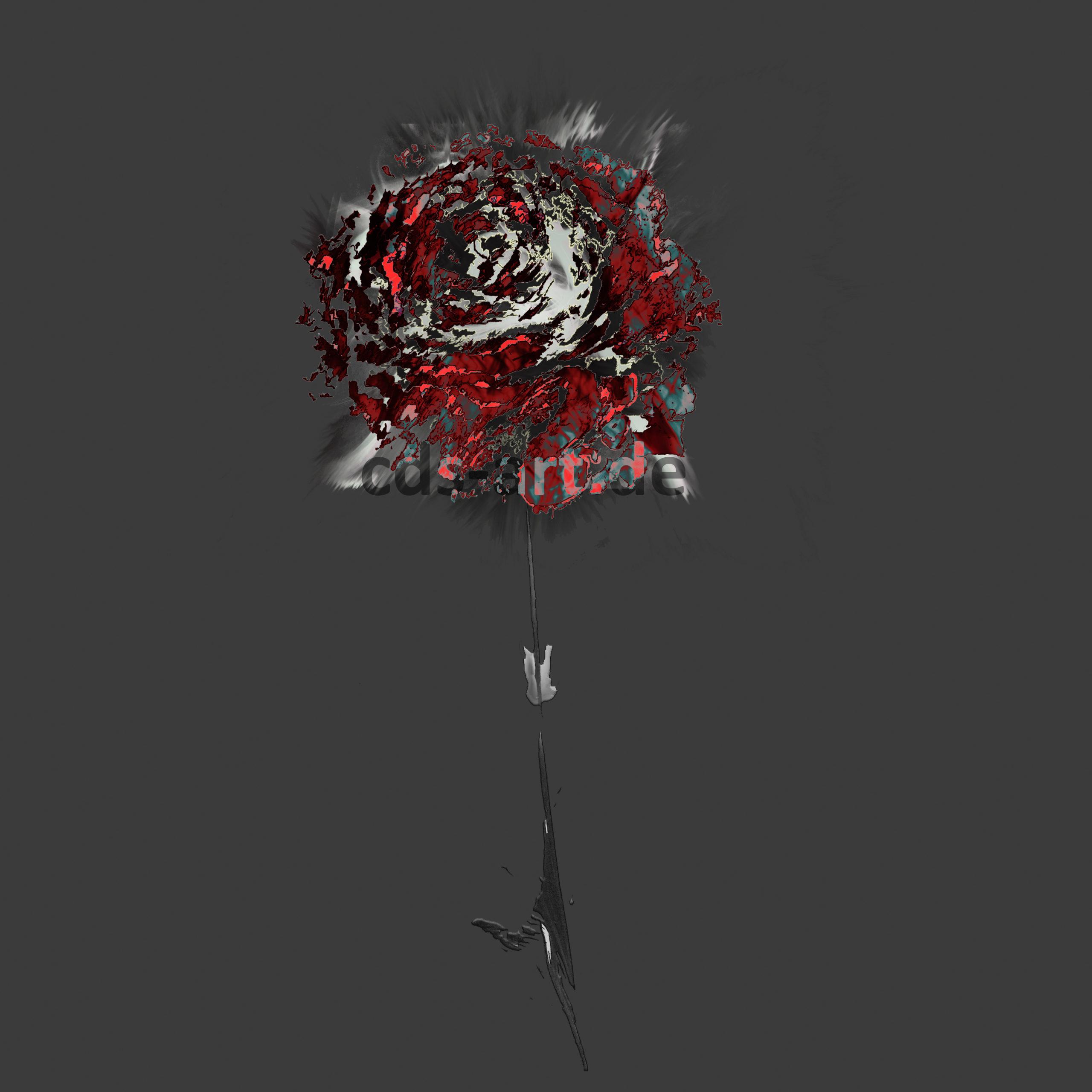 Flowers The dark Rose