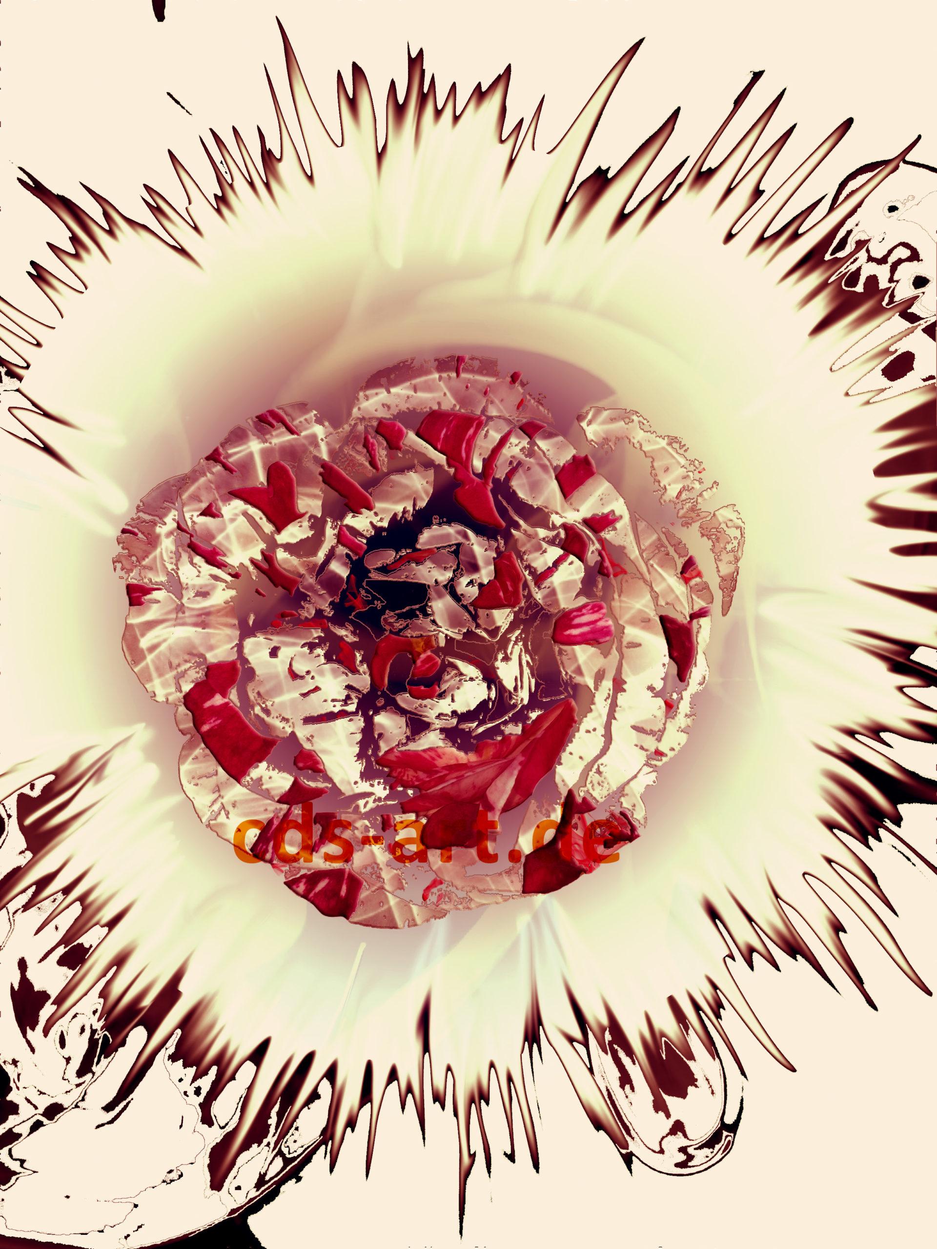 Rose explode