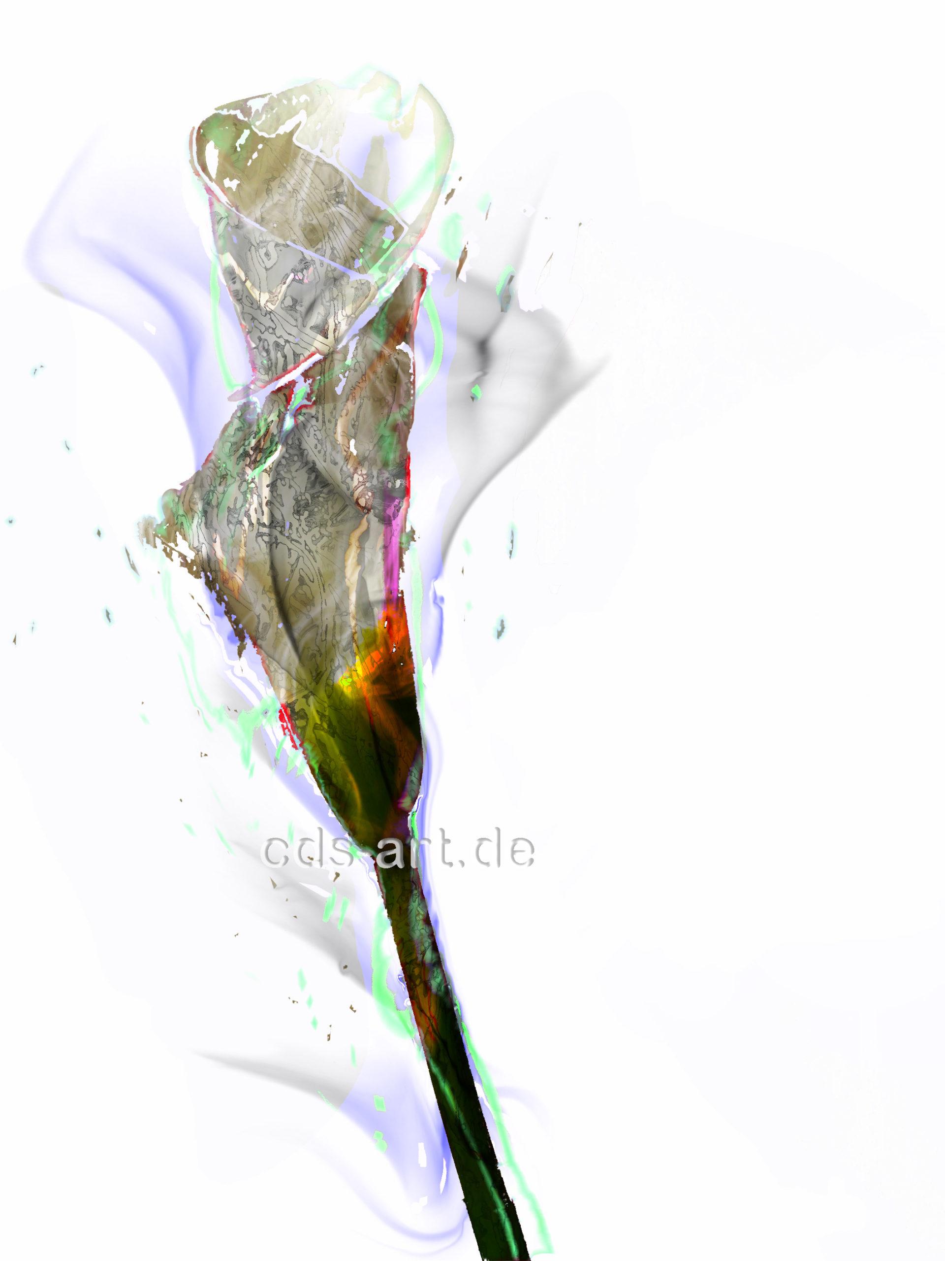 flower cala 1